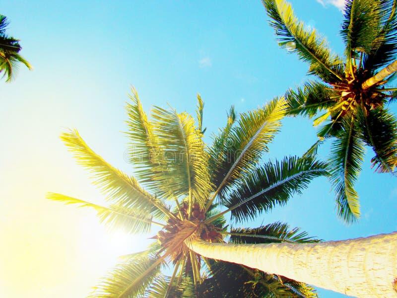 Palmeira tropical, vista inferior, contra o céu azul e a luz solar brilhante imagens de stock