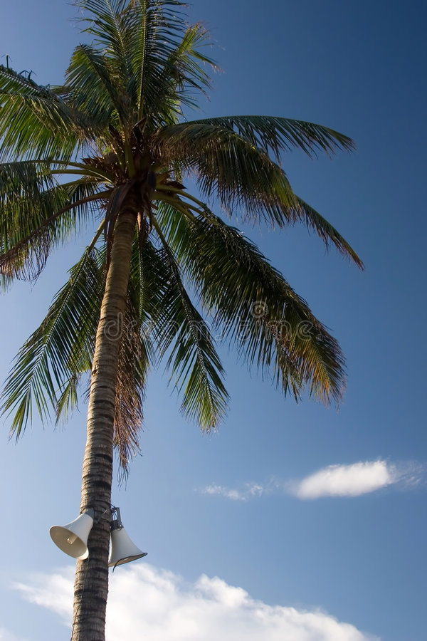 Palmeira vietnamiana com megafone fotografia de stock