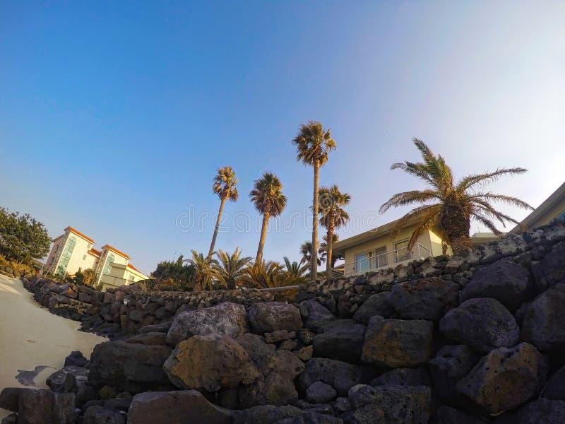 Palmeiras altas na praia fotografia de stock royalty free