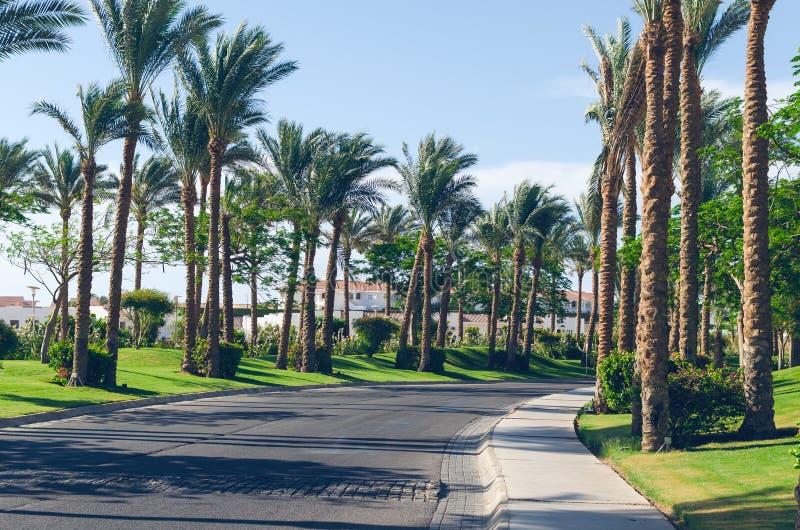 Palmeiras ao longo da estrada na costa do Mar Vermelho, Sharm el-Sheikh, Egito imagem de stock royalty free