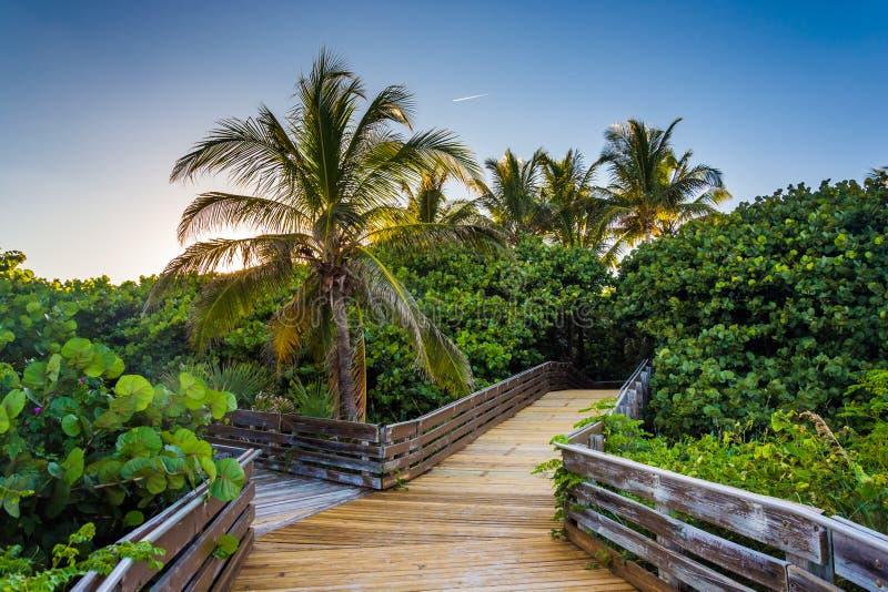 Palmeiras ao longo de um passeio à beira mar no cantor Island, Florida fotografia de stock royalty free