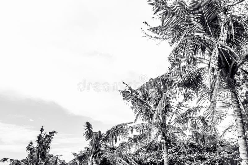 Palmeiras bonitas no fundo bonito da paisagem e no céu azul Zen tropical do abrandamento das palmeiras da praia fotos de stock royalty free