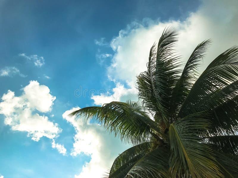 Palmeiras contra o céu azul, palmeiras na costa tropical, vinta foto de stock royalty free