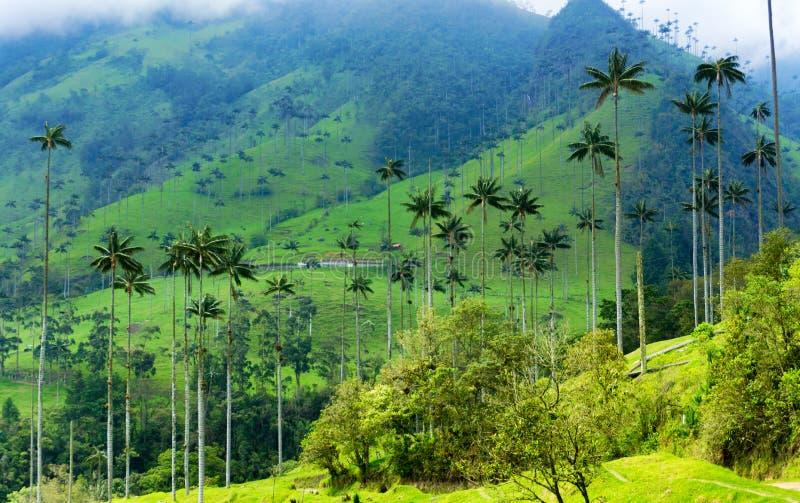 Palmeiras da cera do vale de Cocora foto de stock royalty free