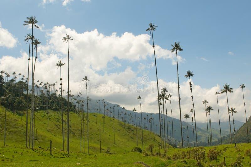 Palmeiras da cera do vale de Cocora, Colômbia foto de stock royalty free