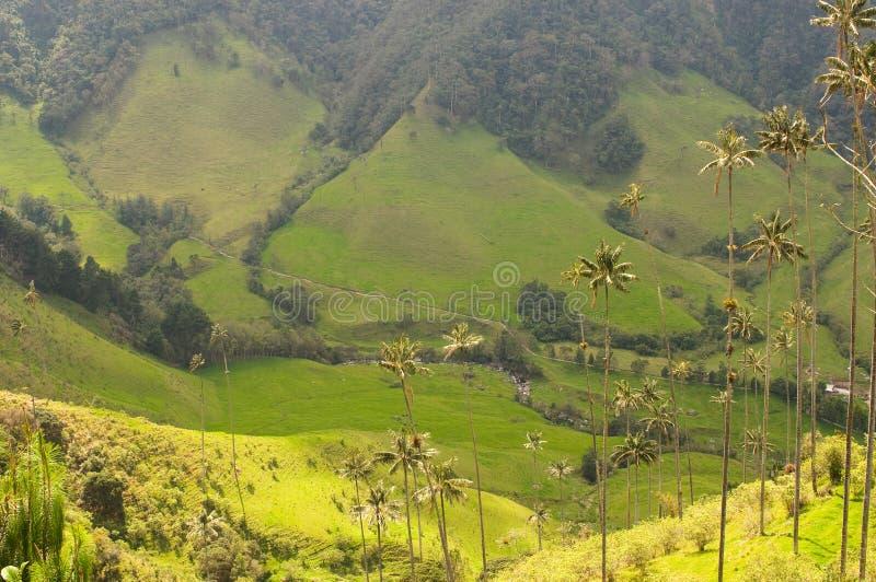 Palmeiras da cera do vale de Cocora, Colômbia foto de stock