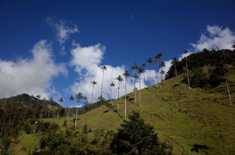 Palmeiras da cera no vale de Cocora fotos de stock royalty free