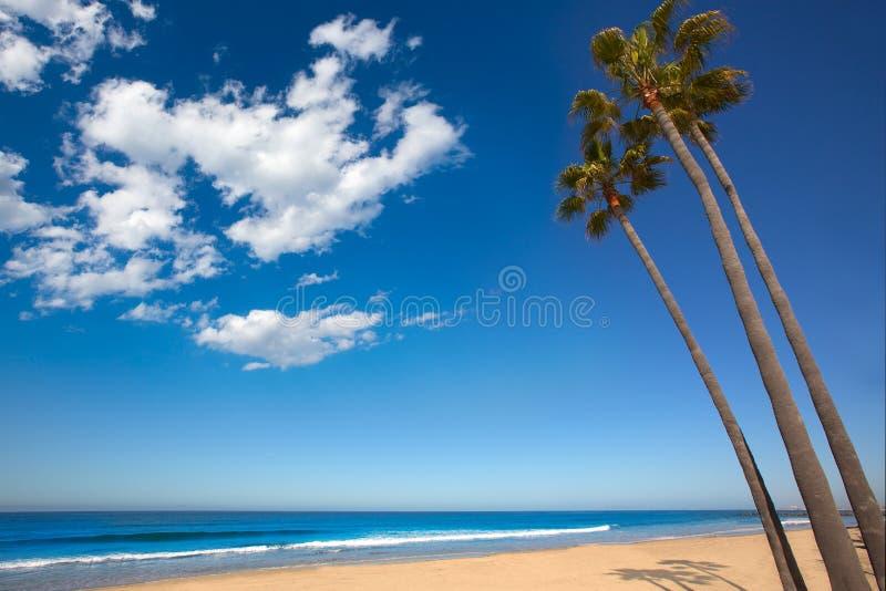 Palmeiras de Califórnia da praia de Newport na costa foto de stock
