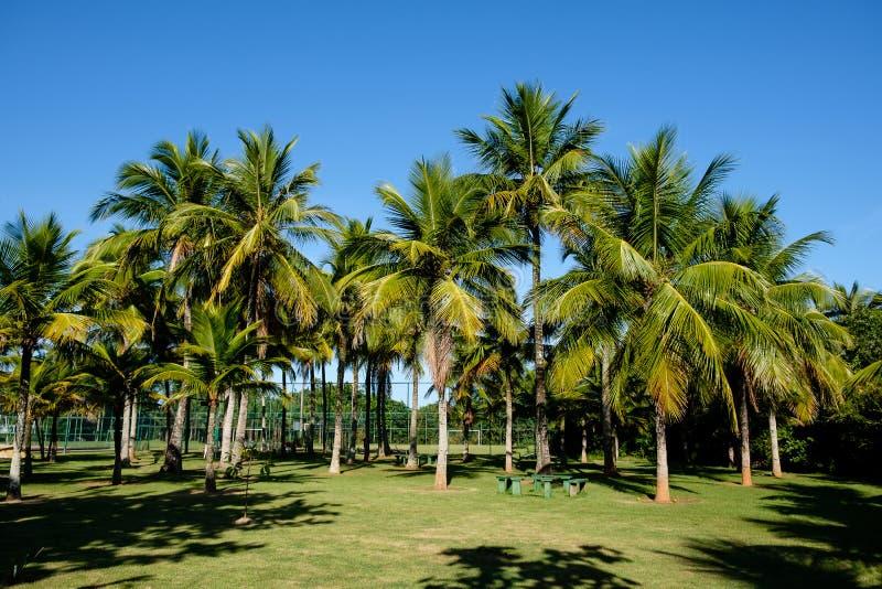 Palmeiras de vários tamanhos em um parque no dia ensolarado em Rio de janeiro Sombras no primeiro plano, e um céu azul profundo fotografia de stock