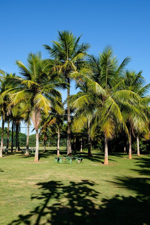 Palmeiras de vários tamanhos em um parque no dia ensolarado em Rio de janeiro Sombras no primeiro plano, e um céu azul profundo fotos de stock royalty free