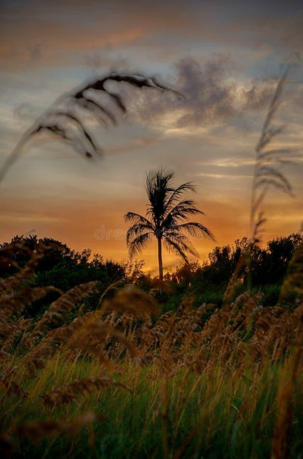 Palmeiras do coco da silhueta na praia no por do sol imagens de stock royalty free