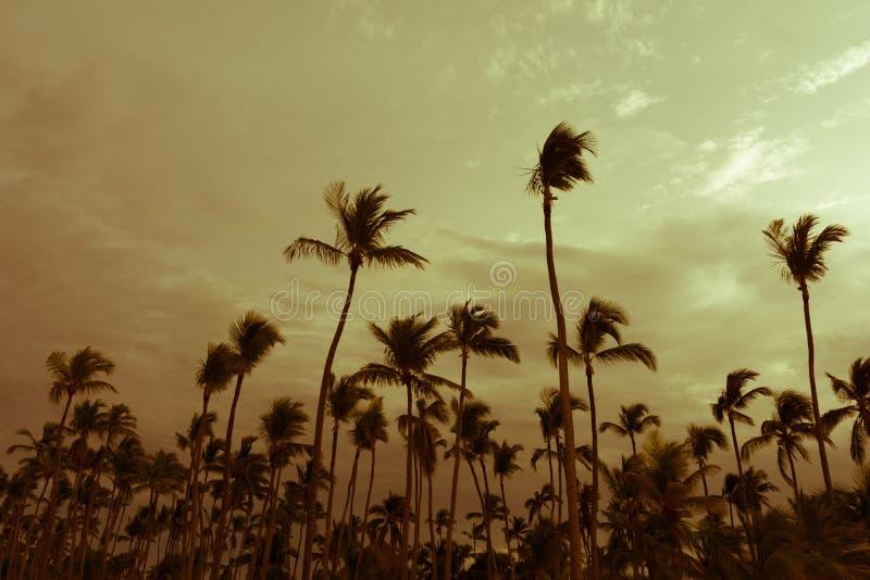 Palmeiras do coco na praia do bavaro foto de stock