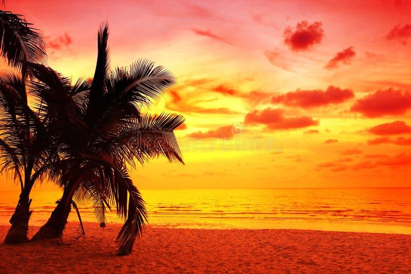 Palmeiras do coco no por do sol imagem de stock