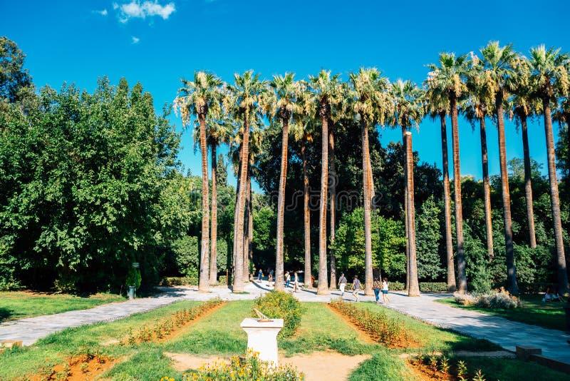 Palmeiras do Jardim Nacional de Atenas, Grécia fotos de stock