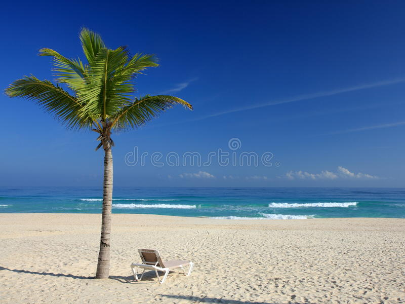 Palmeiras e cadeira na praia tropical imagens de stock royalty free