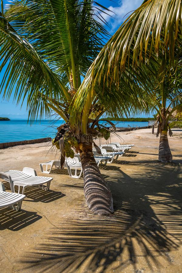 Palmeiras e cadeiras em Belize fotografia de stock