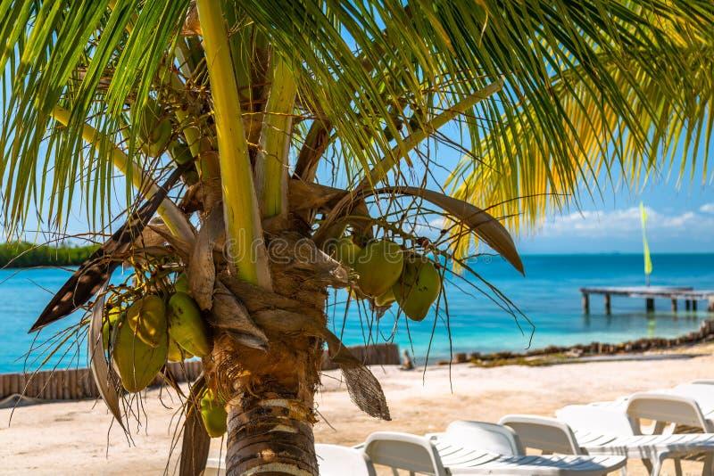 Palmeiras e cadeiras em Belize fotos de stock royalty free