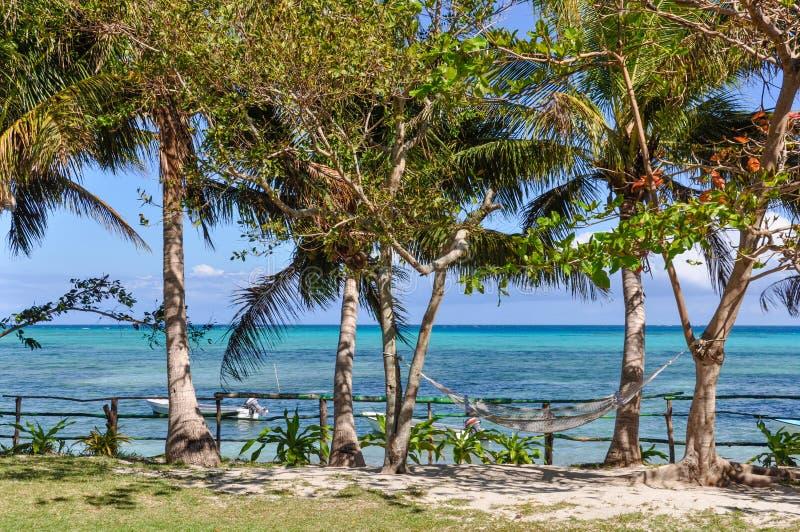 Download Palmeiras E Mar Na Ilha De Nacula Em Fiji Foto de Stock - Imagem de praia, palma: 80100424