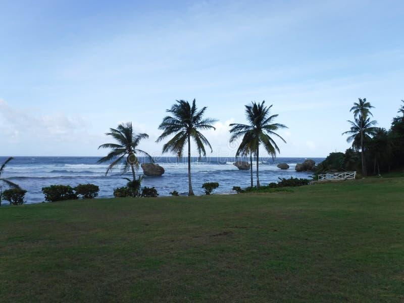 Palmeiras e oceano foto de stock