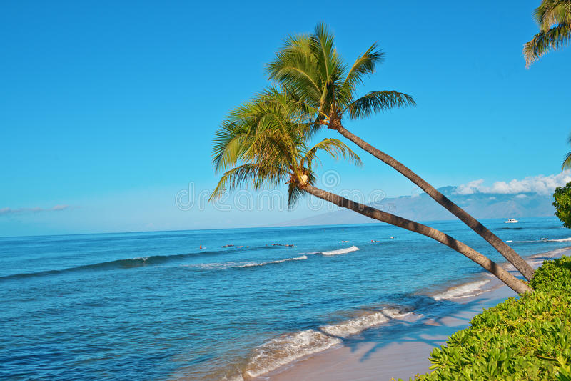 Palmeiras e a praia do oceano imagens de stock
