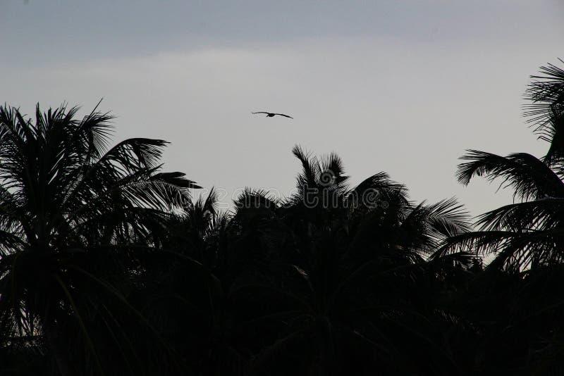 Palmeiras e Sandy Beach branco no por do sol em Caribbeans ilustração royalty free