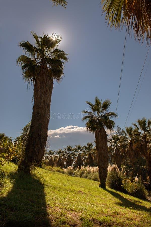 Palmeiras e sol em um parque da cidade foto de stock
