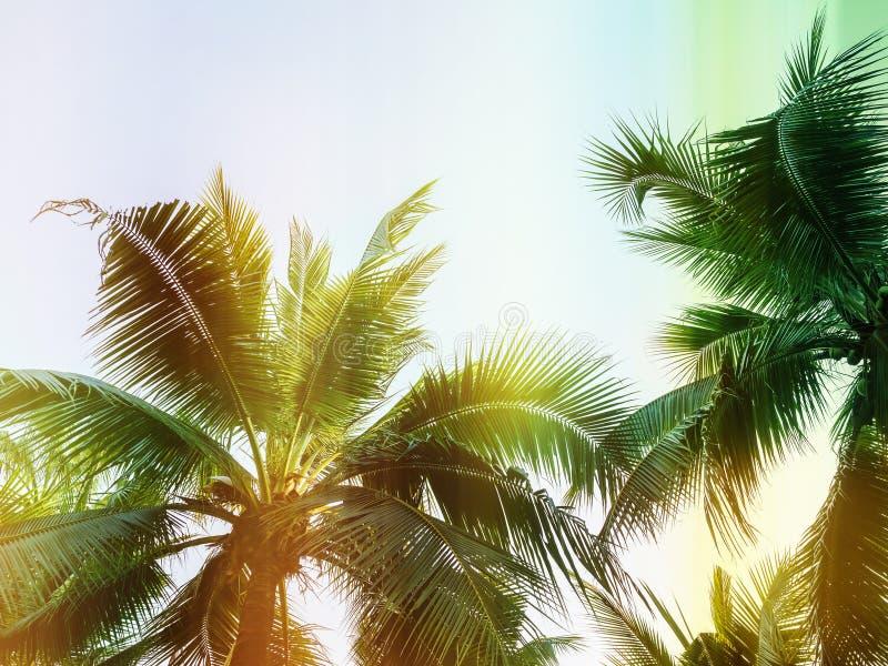 Palmeiras em exterior tropical, estilo do vintag fotografia de stock royalty free