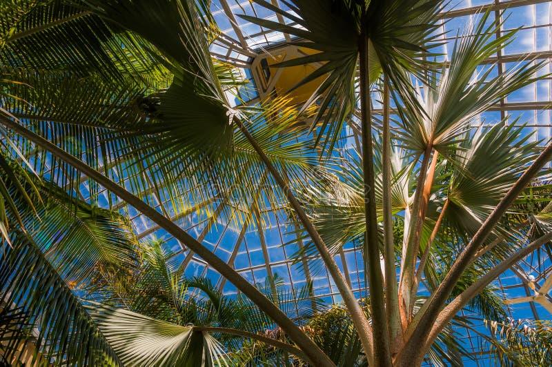 Palmeiras em Howard Peters Rawlings Conservatory, na druida fotos de stock royalty free