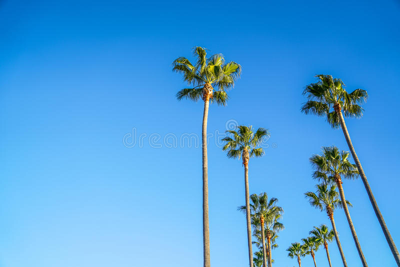 Palmeiras em Long Beach imagem de stock