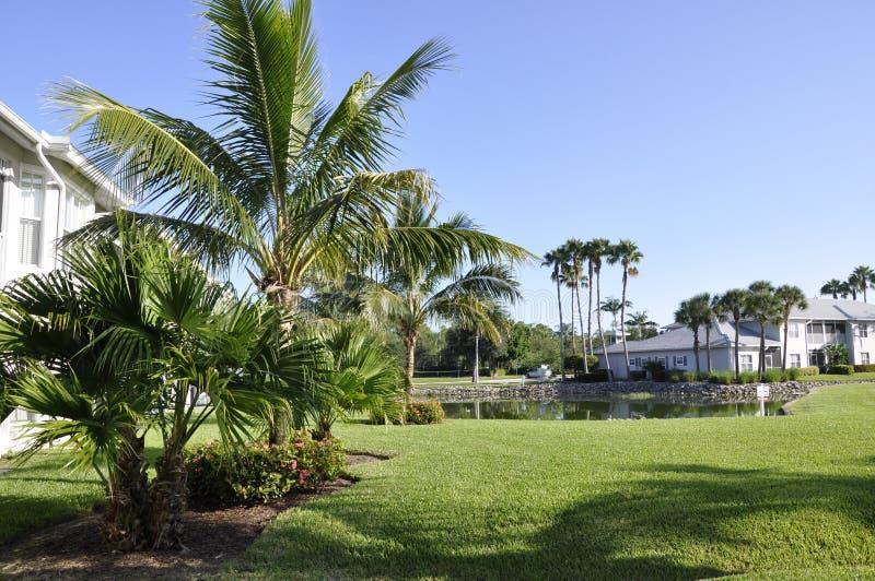 Palmeiras em Nápoles, Florida imagem de stock