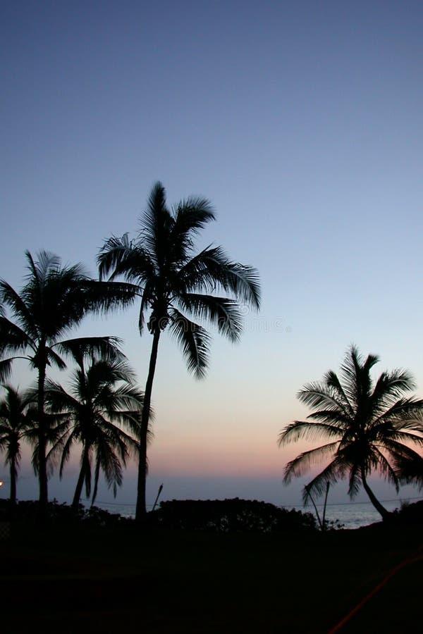 Palmeiras Havaí fotografia de stock