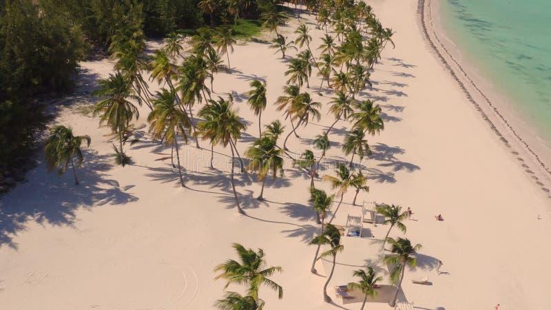 Palmeiras na opinião da praia de cima de foto de stock