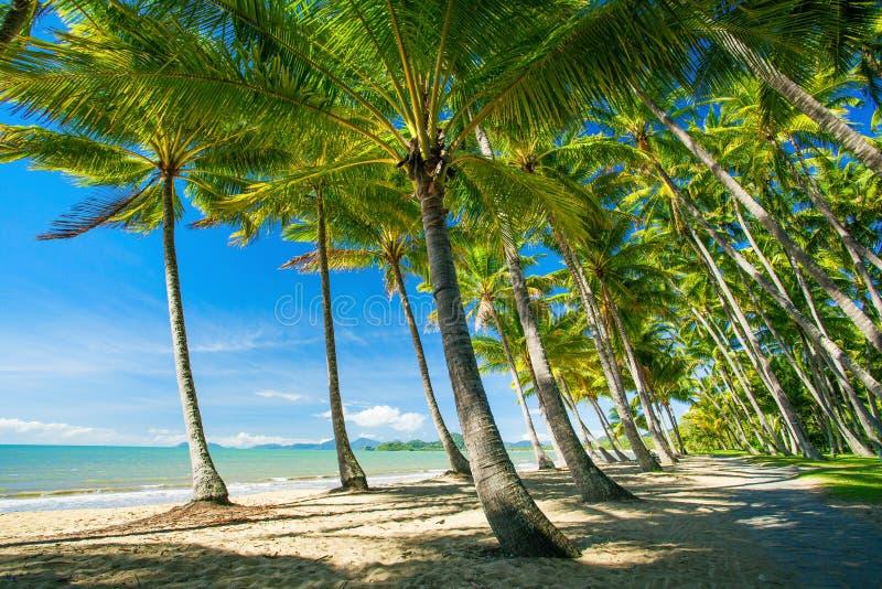 Palmeiras na praia da angra da palma fotos de stock