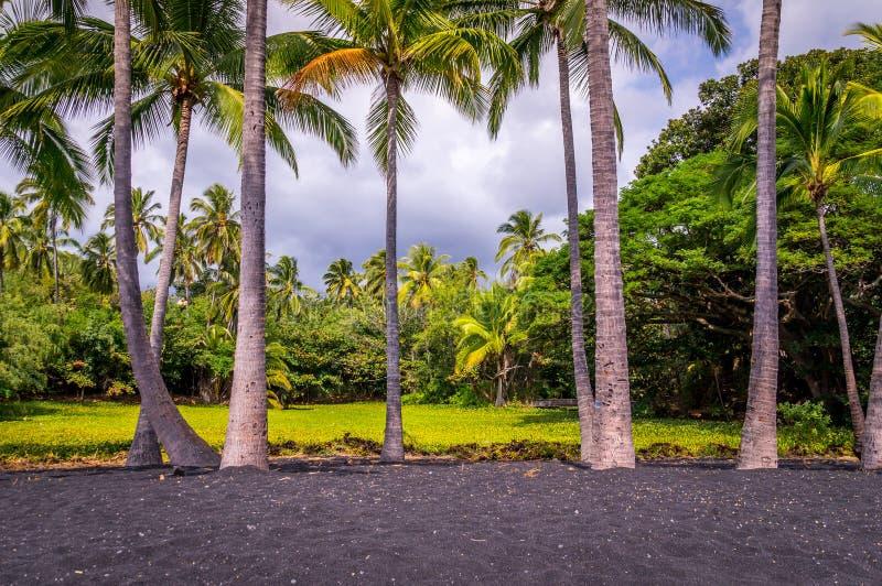 Palmeiras na praia da areia do preto de Punaluu na ilha grande, Havaí fotografia de stock