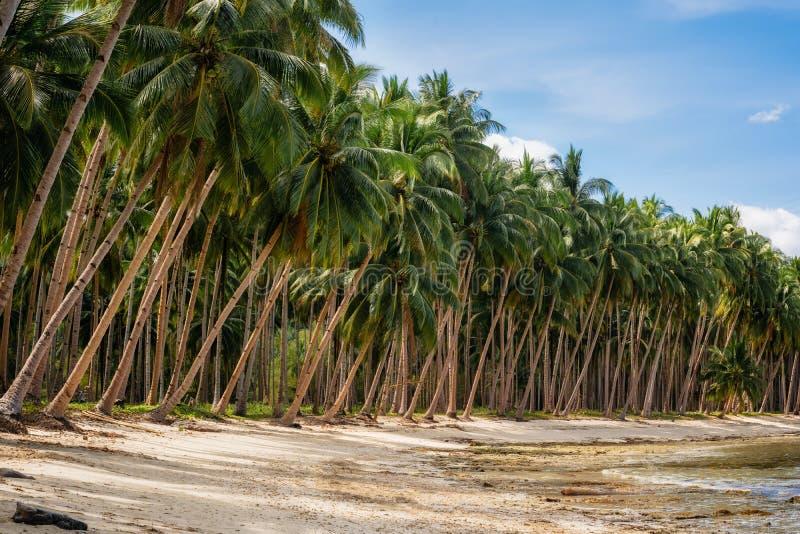Palmeiras na praia do coco em Barton portuário, Palawan, Filipinas imagens de stock royalty free