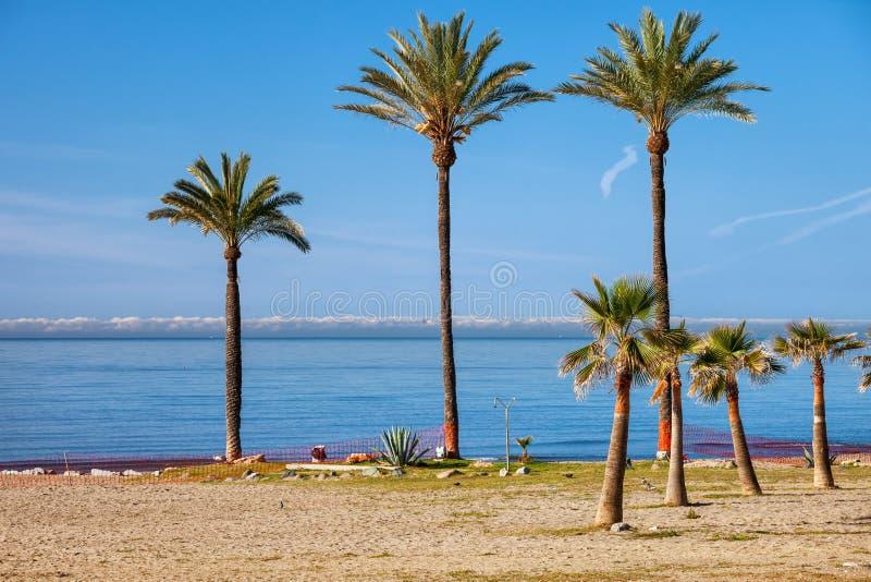 Palmeiras na praia em Costa del Sol em Marbella imagem de stock