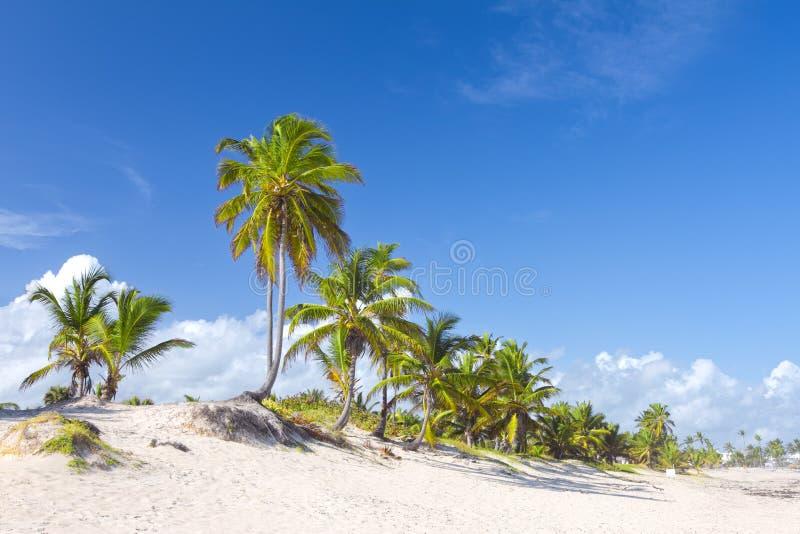 Palmeiras na praia tropical, Bavaro, Punta Cana, dominiquense fotos de stock royalty free