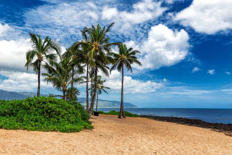 Palmeiras na praia tropical em Haleiwa fotos de stock