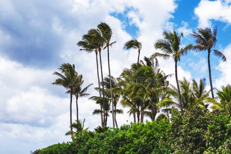 Palmeiras na praia tropical em Haleiwa, costa norte de Oahu fotografia de stock royalty free