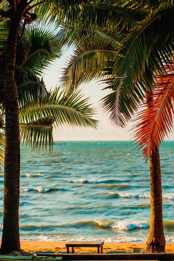 Palmeiras no mar imagens de stock