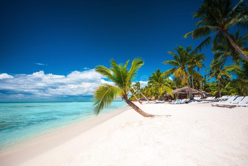Palmeiras no Sandy Beach branco no mar das caraíbas, ilha de Saona República Dominicana imagem de stock