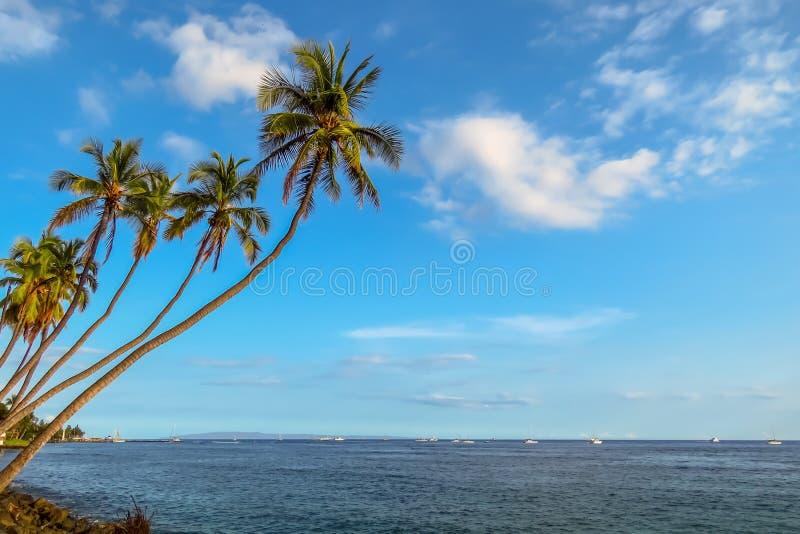 Palmeiras que balançam sobre o mar, paisagem do paraíso, Havaí imagem de stock