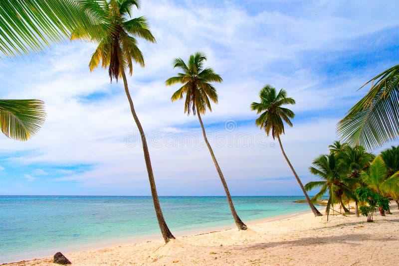 Palmeiras que crescem na costa da ilha das Caraíbas foto de stock royalty free