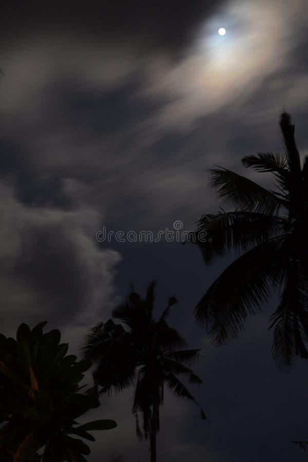 Palmeiras que estão na peça da selva de Bali na noite foto de stock royalty free