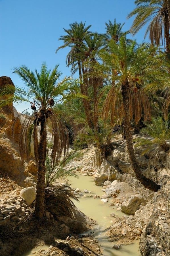 Palmeiras sobre o rio pequeno em oásis do deserto fotografia de stock