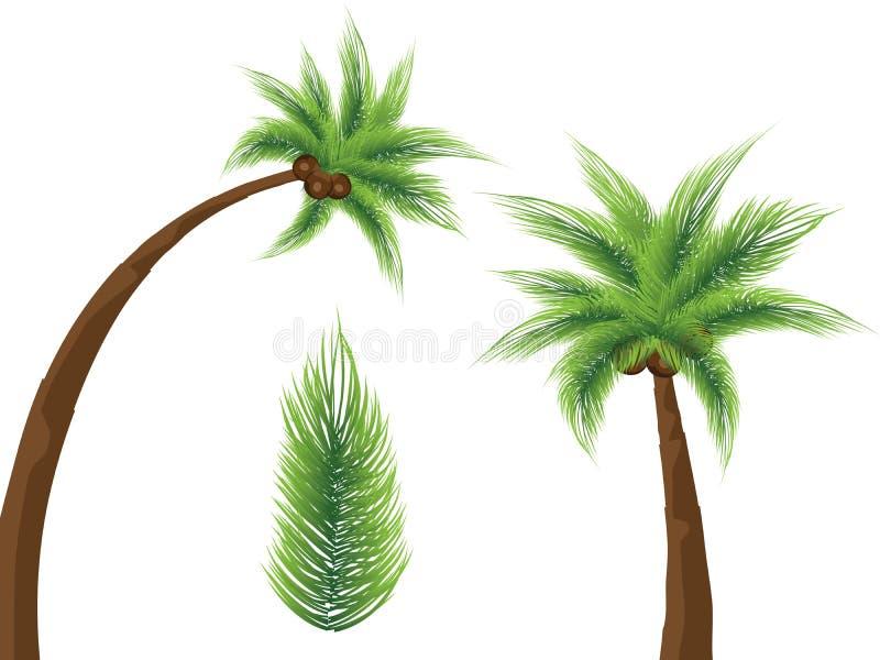 Palmeiras tropicais ilustração royalty free