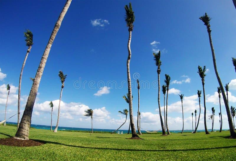 Palmeiras tropicais com folhas pequenas e o Oceano Atlântico fotografia de stock royalty free