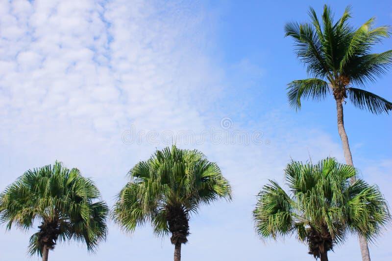 Palmeiras verdes contra o c?u azul em um dia ensolarado Cadeira de plataforma na praia em Brigghton imagem de stock