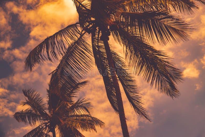 Palmen über Sonnenunterganghimmelhintergrund stockfotografie