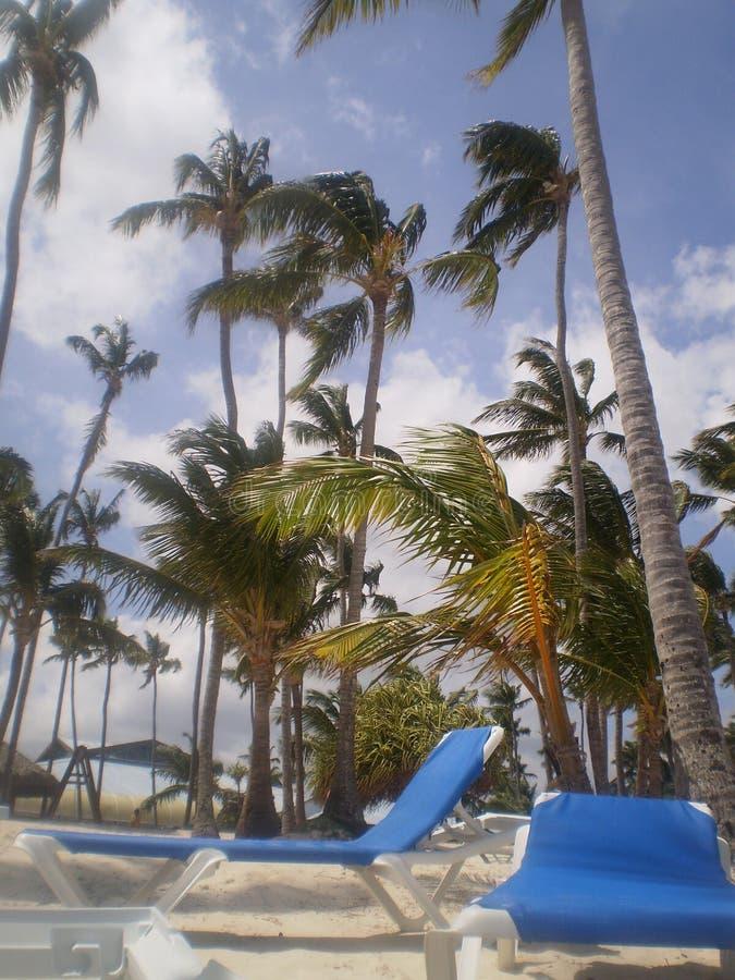 palmen royalty-vrije stock foto